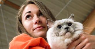 Ponad 240 kotów rasowych w Sopocie