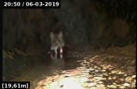 Szczur w kanalizacji w biurowcu | Pogotowie Kanalizacyjne - KANAL-SERWIS24.PL