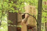 Dzikie pszczoły wracają do trójmiejskich lasów