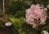 Zobacz nasz zespół w akcji | Wedding Alchemy® by Valentina