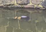 Mężczyzna wpadł do kanału Raduni