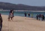 Oto co koniary wyprawiają na plaży w ...