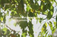 Zrób coś dobrego - posadź drzewo