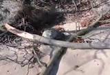 Foka na plaży w Orłowie