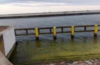 Foka na końcu skweru Kościuszki w Gdyni
