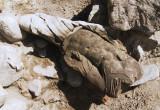 Rzeźba w Zakładach Mięsnych
