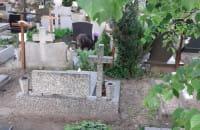 Znowu Dziki na Cmentarzu Oliwskim ....