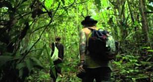 "Zwiastun filmu ""Fuck for Forest"""