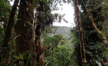 Gdańscy badacze założą rezerwat w Kolumbii
