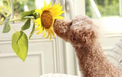 Rośliny trujące dla psa i kota