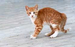 Sposoby na odnalezienie zaginionego kota
