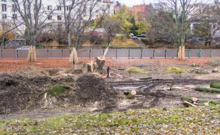 Początek budowy Parku Centralnego