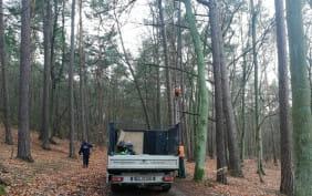 Kot był ściągany z 30-metrowego drzewa