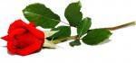Kwiaciarnia Baccara L.Eichert - dostawa na telefon