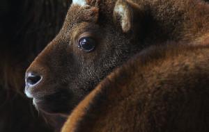 W gdańskim ZOO przyszło na świat takiniątko