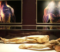 Kontrowersyjna wystawa: lekcja anatomii czy łamanie prawa?