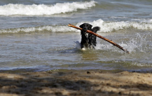 Kolejna plaża dla psów w Gdyni od maja