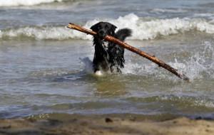 Z psem już wejdziesz na plażę w Sopocie. Sprawdź gdzie i kiedy