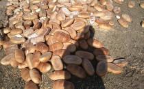 Sterta 150 kg chleba wysypana w...