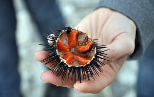 Japoński przysmak zawita do Avocado