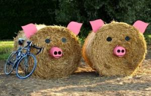 Nowe trasy w Maratonie Rowerowym Żuławy Wkoło 2015