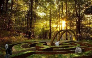Ogród botaniczny w Gdyni bez szlaku w koronach drzew