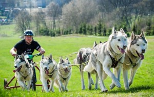 Ekstremalne wyścigi psich zaprzęgów