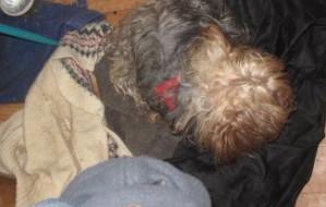 Zostawił psy bez opieki, przez prawie tydzień były zamknięte w mieszkaniu