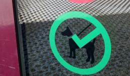 Z psem do centrum handlowego. Czy to dobry pomysł?