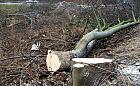 Wycinka drzew. Niższe opłaty i kary