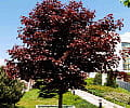 Jesień w ogrodzie. Sadzimy drzewa, krzewy i pnącza, które szybko rosną