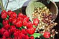 Darmowe cebulki kwiatów dla gdańszczan