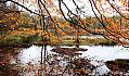 Bieszkowickie Moczary w jesiennych barwach