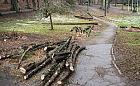 Wycinka drzew i krzewów w Parku Oruńskim