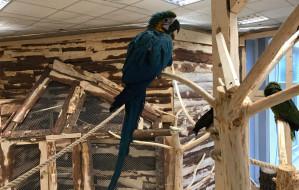W Gdańsku otwarto pierwszą papugarnię