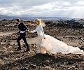 Sesje deluxe, czyli fotografia ślubna dla wymagających