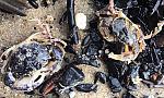 Sztorm wyrzucił kraby na gdyńską plażę