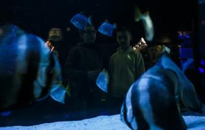 Akwarium i zoo pobiły rekordy frekwencji