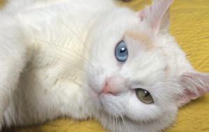 Światowy dzień kota. Imprezy dla miłośników futrzaków w Trójmieście