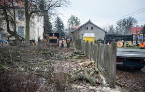 Nowa ustawa o ochronie przyrody. Polska w trocinach? Nie w Trójmieście