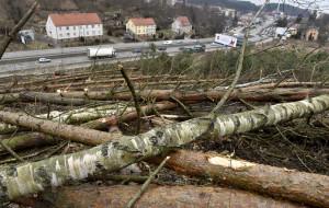 Wycinka drzew w Trójmieście: rabunek czy w normie?