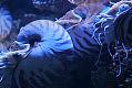 Ryby-ananasy i waleczne łodziki