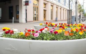 Gdynia ukwiecona na wiosnę