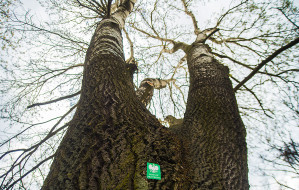 Zaproponuj pomnik przyrody