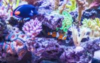 Nowoczesne akwaria - egzotyczne, podwodne światy
