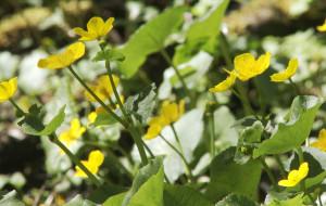Wędrówki z Borsukiem: wiosna w Dolinie Samborowo