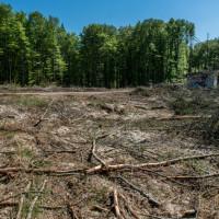 Wyciął kilkaset drzew w ramach 'sprzątania' po jednostce wojskowej