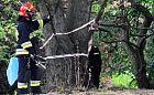 Gdynia: Ktoś rozsypał żrący środek czyszczący w parku