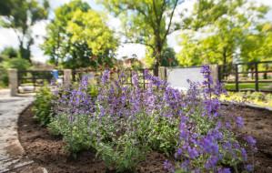 Ogród oddziałujący na zmysły w Oliwie