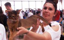 Sopocka wystawa kotów rasowych